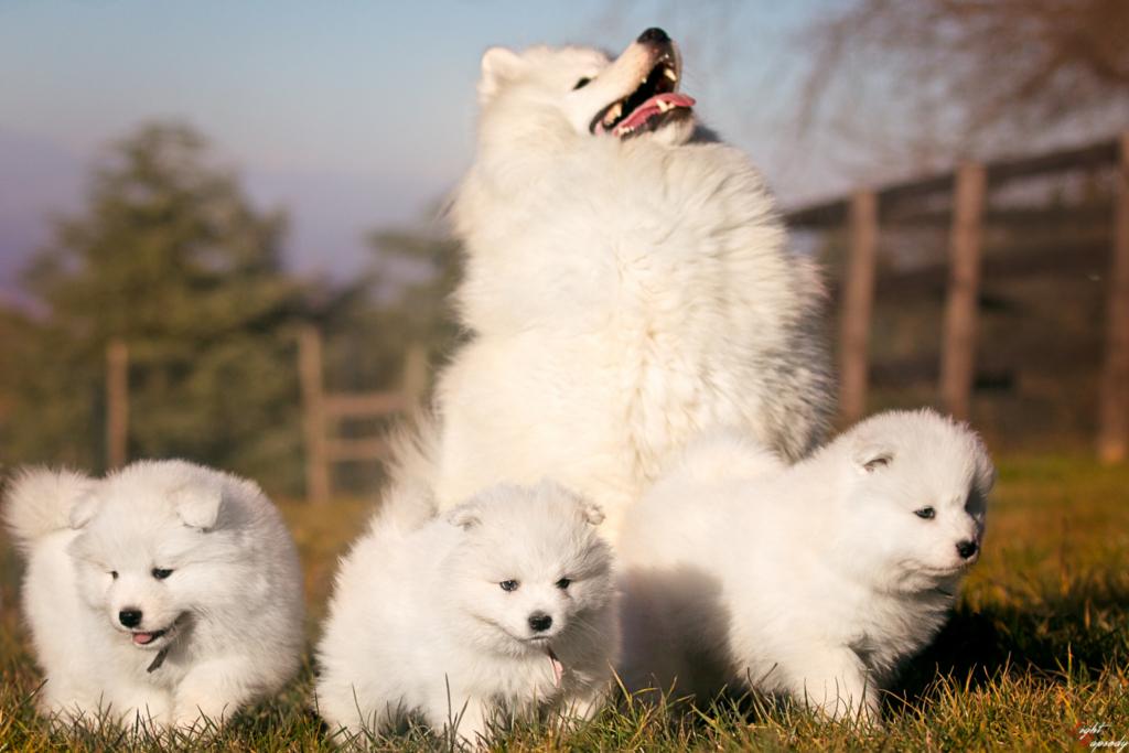Diana e i suoi cuccioli 1024x683 Home